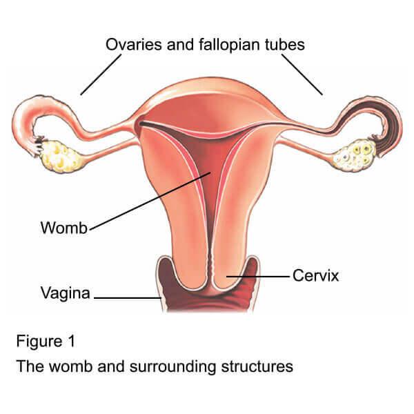 Hysterectomy in nashik